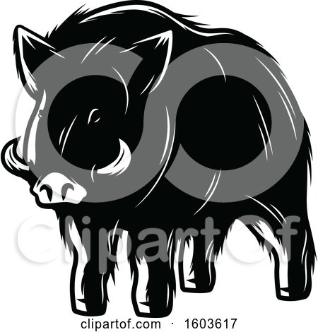 Clipart of a Wild Boar in Black and White - Royalty Free Vector Illustration by Vector Tradition SM