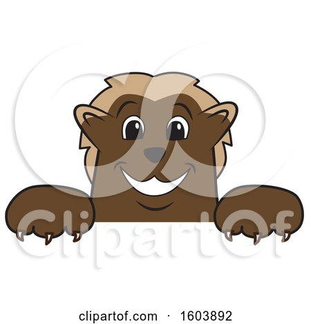 Clipart of a Wolverine School Mascot Character over a Sign - Royalty Free Vector Illustration by Toons4Biz