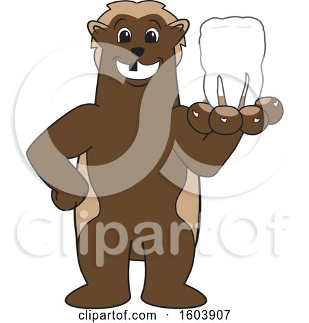 Clipart of a Wolverine School Mascot Character Holding out a Tooth - Royalty Free Vector Illustration by Toons4Biz
