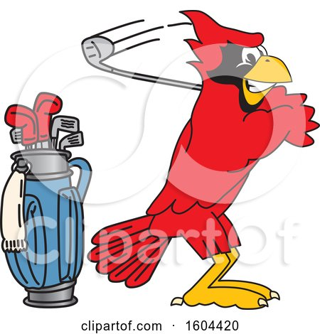 Clipart of a Red Cardinal Bird School Mascot Character Golfing - Royalty Free Vector Illustration by Toons4Biz