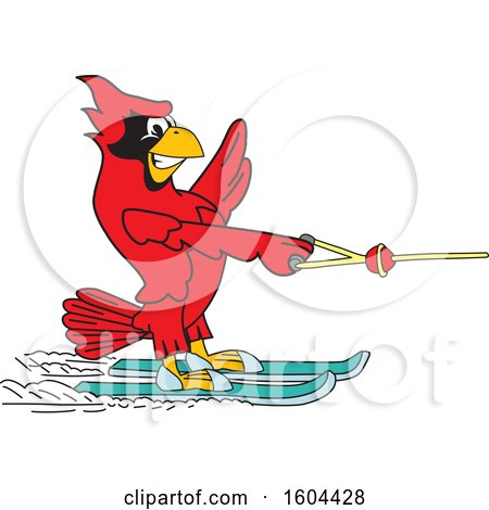 Clipart of a Red Cardinal Bird School Mascot Character Water Skiing - Royalty Free Vector Illustration by Toons4Biz