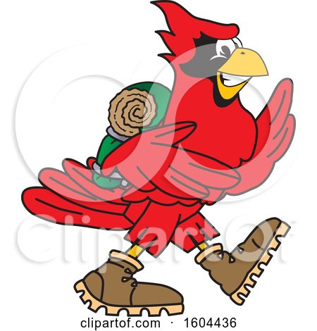 Clipart of a Red Cardinal Bird School Mascot Character Hiking - Royalty Free Vector Illustration by Toons4Biz