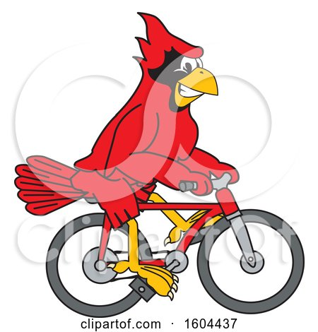 Clipart of a Red Cardinal Bird School Mascot Character Riding a Bicycle - Royalty Free Vector Illustration by Toons4Biz