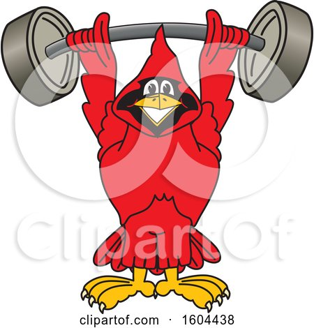 Clipart of a Red Cardinal Bird School Mascot Character Lifting a Heavy Barbell - Royalty Free Vector Illustration by Toons4Biz