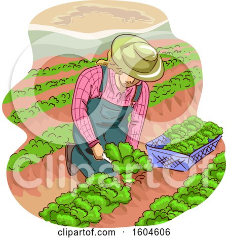 Clipart of a Female Farmer Kneeling and Harvesting Lettuce - Royalty Free Vector Illustration by BNP Design Studio
