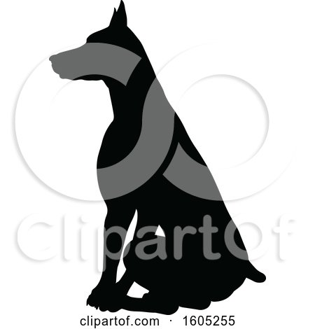 Clipart of a Black Silhouetted Dobermann Dog Sitting - Royalty Free Vector Illustration by AtStockIllustration