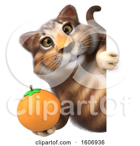 Clipart of a 3d Tabby Kitty Cat Holding an Orange, on a White Background - Royalty Free Illustration by Julos