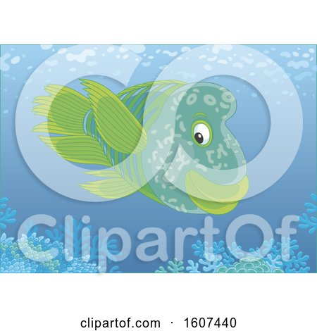Clipart of a Humphead Wrasse Fish over a Reef - Royalty Free Vector Illustration by Alex Bannykh