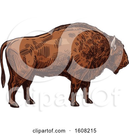 Clipart of a Sketched Bison Buffalo - Royalty Free Vector Illustration by Vector Tradition SM