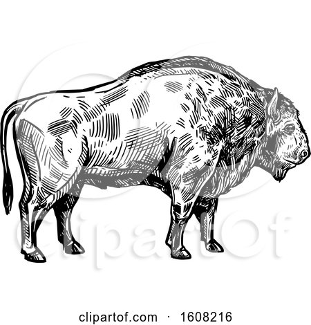 Clipart of a Sketched Black and White Bison Buffalo - Royalty Free Vector Illustration by Vector Tradition SM