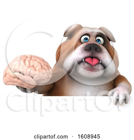 Clipart of a 3d Bulldog Holding a Brain, on a White Background - Royalty Free Illustration by Julos