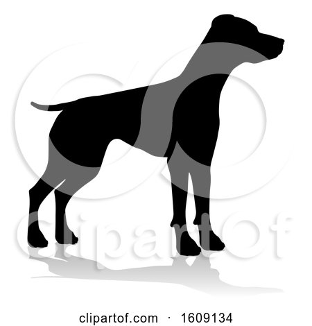 Clipart of a Silhouetted Pointer Dog, with a Reflection or Shadow, on a White Background - Royalty Free Vector Illustration by AtStockIllustration