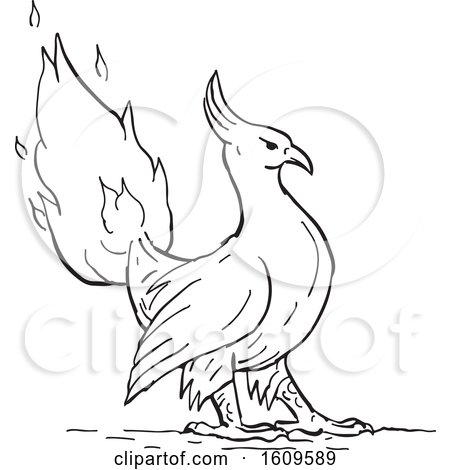 Clipart of a Sketched Phoenix Bird with Its Tail in Flames in Black and White - Royalty Free Vector Illustration by patrimonio