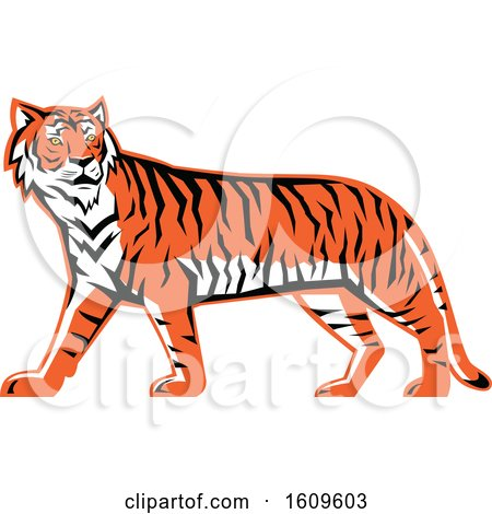 Clipart of a Walking Bengal Tiger Mascot - Royalty Free Vector Illustration by patrimonio