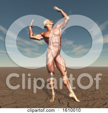3D Male Body Builder with Muscle Map in Barren Landscape by KJ Pargeter