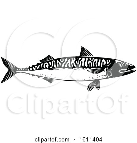 Clipart of a Black and White Mackerel Fish - Royalty Free Vector Illustration by Vector Tradition SM