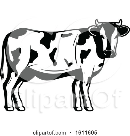 Clipart of a Black and White Cow - Royalty Free Vector Illustration by Vector Tradition SM