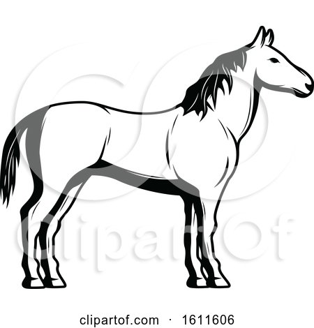 Clipart of a Black and White Horse - Royalty Free Vector Illustration by Vector Tradition SM
