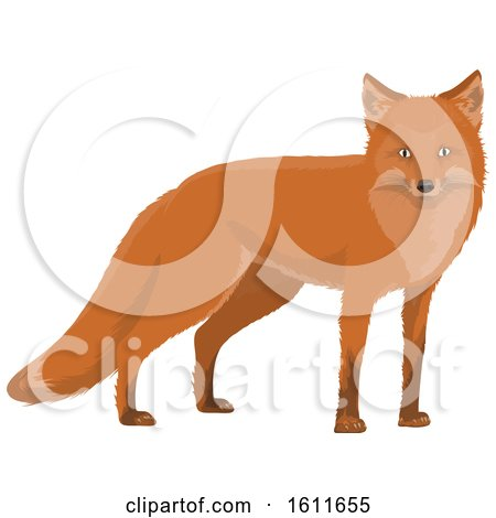 Clipart of a Fox - Royalty Free Vector Illustration by Vector Tradition SM