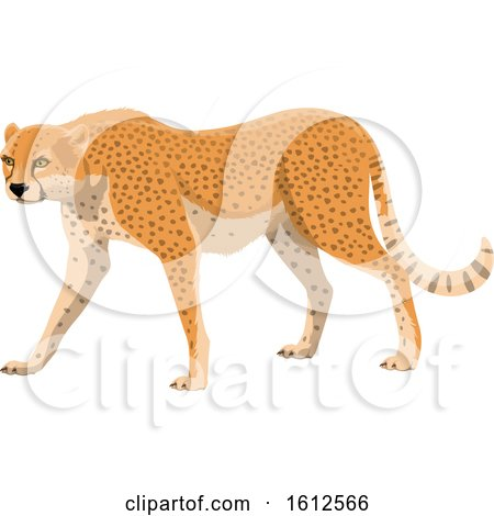 Clipart of a Walking Cheetah - Royalty Free Vector Illustration by Vector Tradition SM