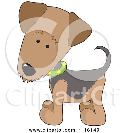 Airedale Or Waterside Terrier Puppy Dog Wearing A Green Collar With Yellow Dots Clipart Illustration Image by Maria Bell