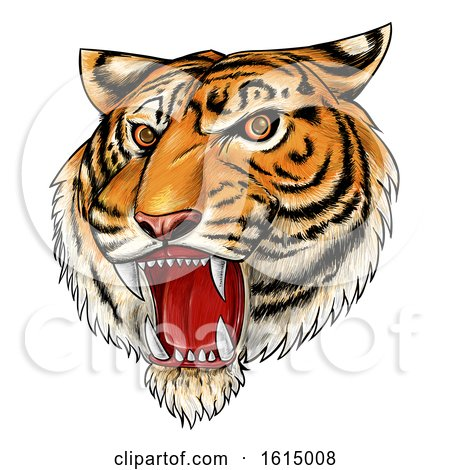 Clipart of a Roaring Angry Tiger Mascot Face, Hand Drawn - Royalty Free Vector Illustration by Domenico Condello
