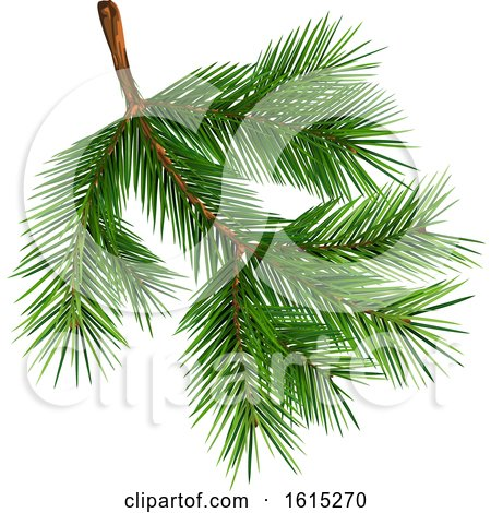Clipart of a Fir Tree Branch - Royalty Free Vector Illustration by dero