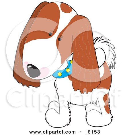 Cute Cavalier King Charles Spaniel Puppy Dog Wearing A Blue Collar With Yellow Spots, Tilting His Head In Curiousity Clipart Illustration Image by Maria Bell