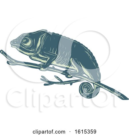 Clipart of a Scratchboard Style Chameleon on a Branch - Royalty Free Vector Illustration by patrimonio