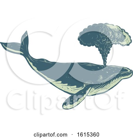 Clipart of a Scratchboard Style Spouting Humpback Whale - Royalty Free Vector Illustration by patrimonio