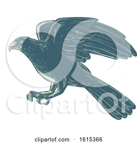 Clipart of a Scratchboard Style Northern Goshawk Bird - Royalty Free Vector Illustration by patrimonio