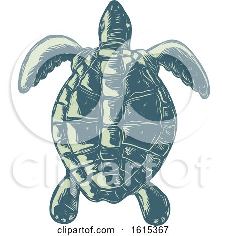 Clipart of a Scratchboard Style Sea Turtle Swimming - Royalty Free Vector Illustration by patrimonio
