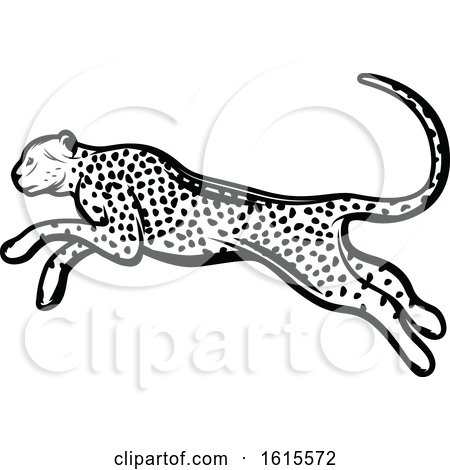 Clipart of a Black and White Cheetah - Royalty Free Vector Illustration by Vector Tradition SM