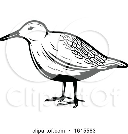 Clipart of a Black and White Bird - Royalty Free Vector Illustration by Vector Tradition SM