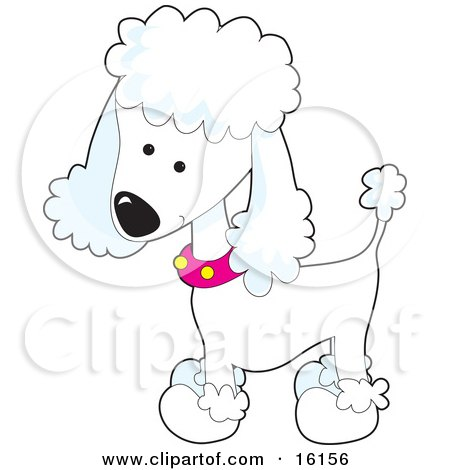 Cute White Poodle Puppy Dog Wearing A Pink Collar With Yellow Spots And Sporting A Puppy Clip Clipart Illustration Image by Maria Bell