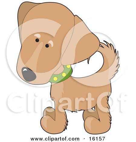 Cute Golden Retriever Puppy Dog Wearing A Green Collar With Yellow Spots, Slightly Tilting His Head In Curiousity Clipart Illustration Image by Maria Bell