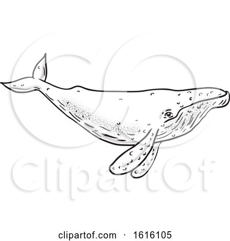 Clipart of a Black and White Sketched Humpback Whale - Royalty Free Vector Illustration by patrimonio