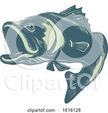 Clipart of a Scratchboard Style Barramundi or Asian Sea Bass - Royalty Free Vector Illustration by patrimonio