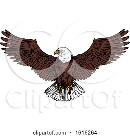 Clipart of a Sketched Flying Bald Eagle - Royalty Free Vector Illustration by Vector Tradition SM