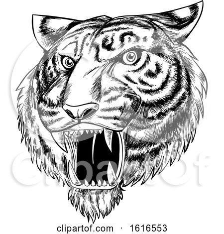 Clipart of a Roaring Angry Tiger Mascot Face, Hand Drawn, Black and White - Royalty Free Vector Illustration by Domenico Condello
