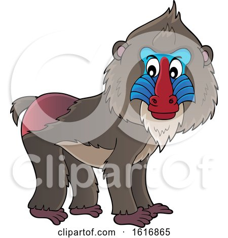 Clipart of a Mandrill - Royalty Free Vector Illustration by visekart