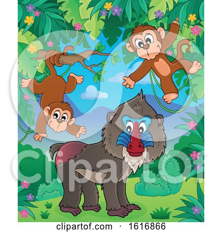 Clipart of a Mandrill and Monkeys - Royalty Free Vector Illustration by visekart
