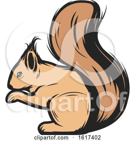 Squirrel by Vector Tradition SM