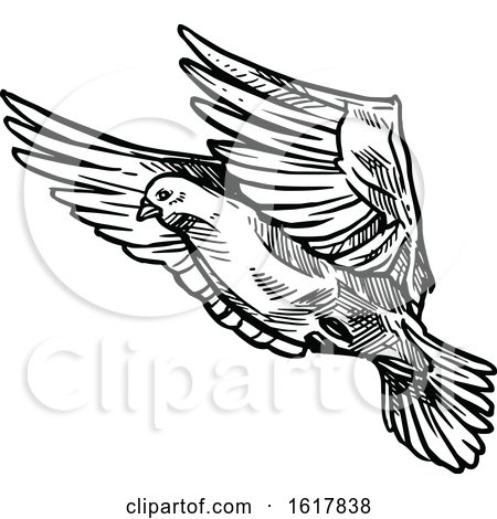 Black and White Sketched Flying Dove by Vector Tradition SM