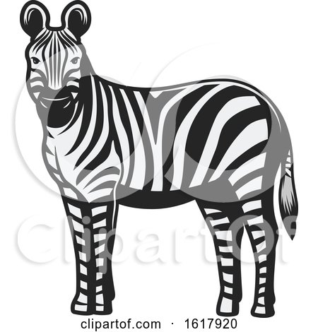 Zebra by Vector Tradition SM