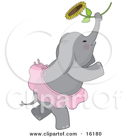 Cute Elephant With Rosey Cheeks, Wearing A Ballerina Tutu While Dancing Ballet With A Sunflower Posters, Art Prints