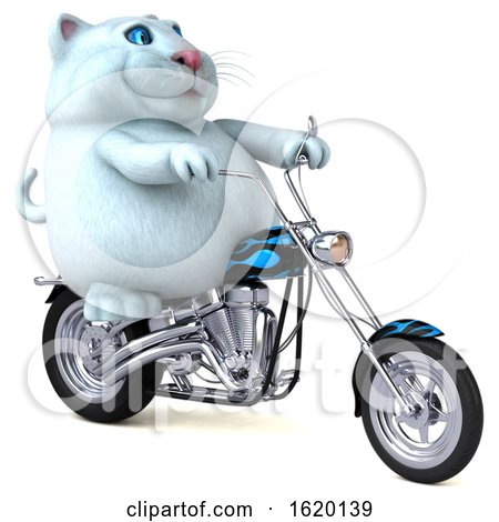 3d White Kitty Cat, on a White Background by Julos