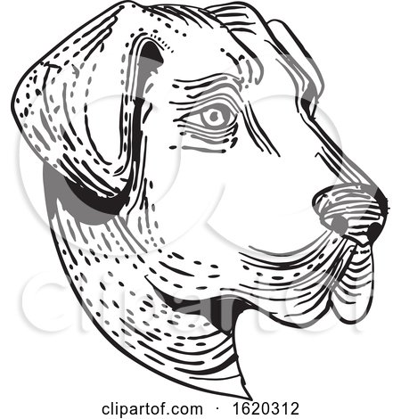 Anatolian Shepherd Dog Head Etching Black and White by patrimonio