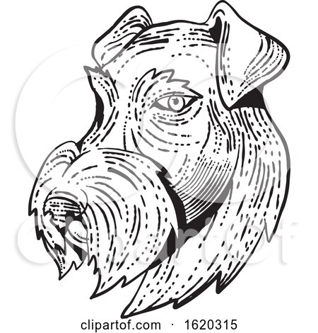 Airedale Terrier Head Etching Black and White by patrimonio