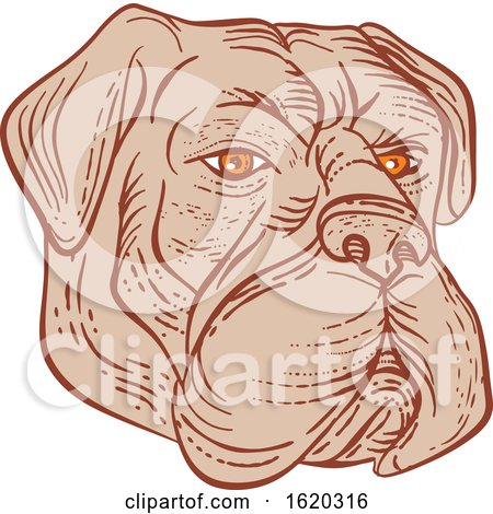 Bullmastiff Head Etching Color by patrimonio